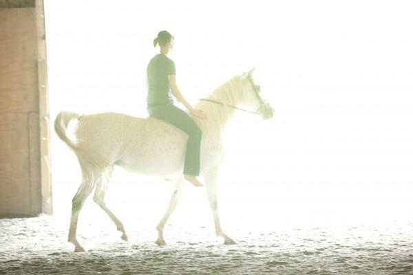 fjv_horsebarn_20